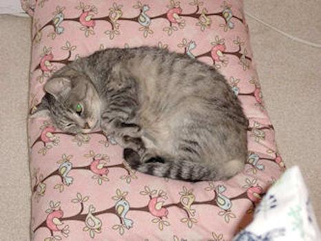 Pet Bed Pattern - Envelope Back Pillowcase